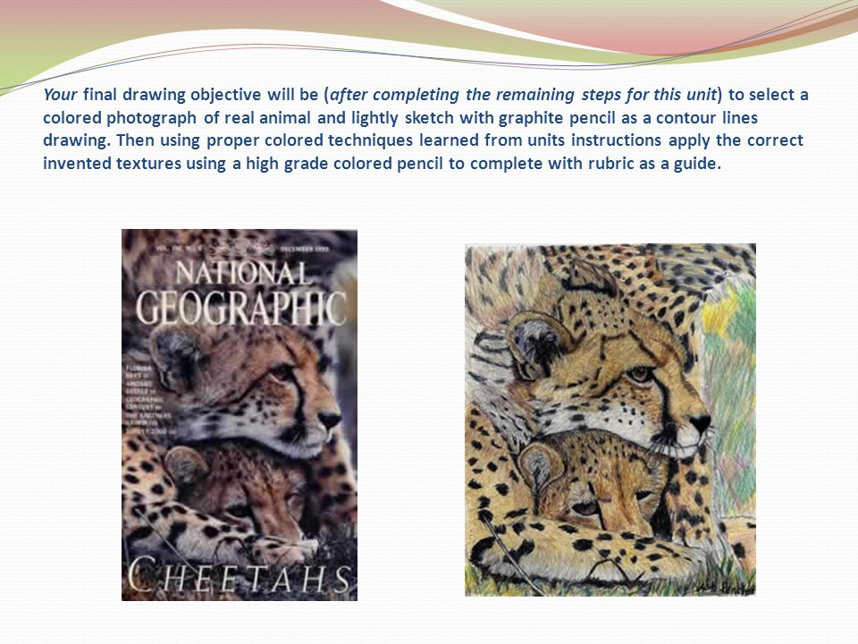 Your final drawing objective will be (after completing the remaining steps for this unit) to select a colored photograph of real animal and lightly sketch with graphite pencil as a contour lines drawing.
