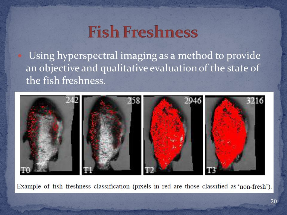 Fish Freshness Using hyperspectral imaging as a method to provide an objective and qualitative evaluation of the state of the fish freshness.