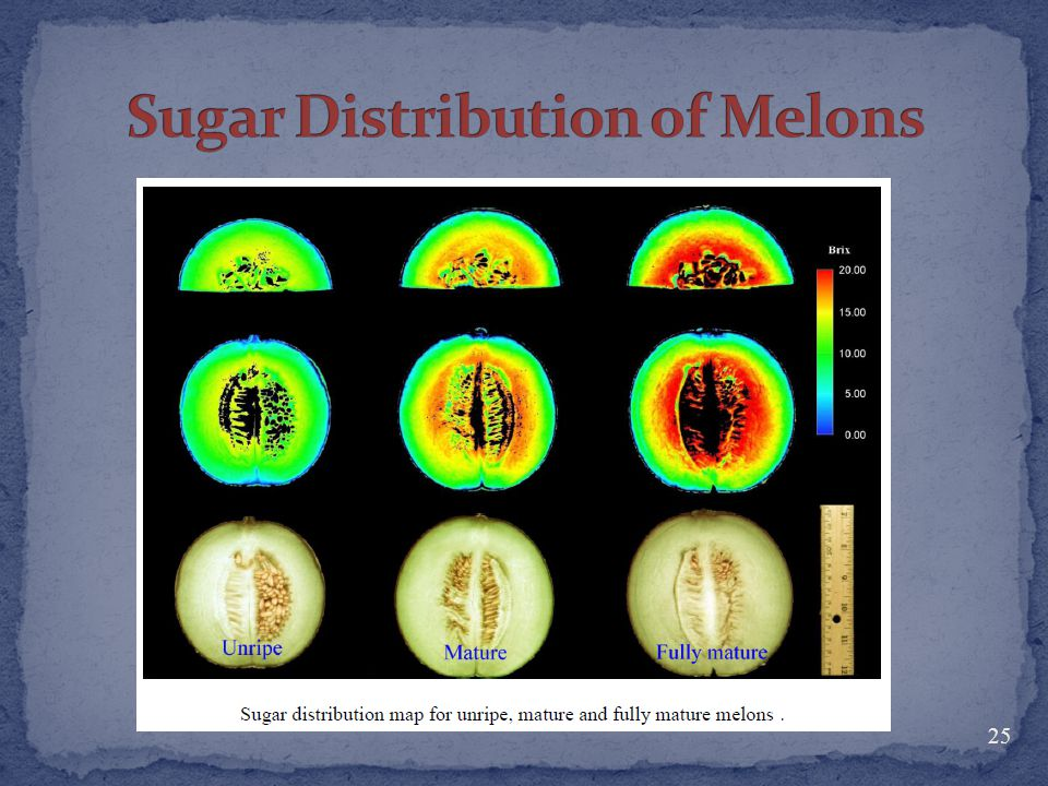 Sugar Distribution of Melons