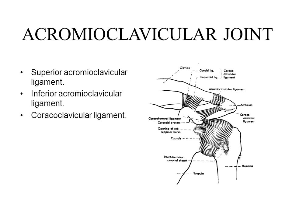 ACROMIOCLAVICULAR JOINT