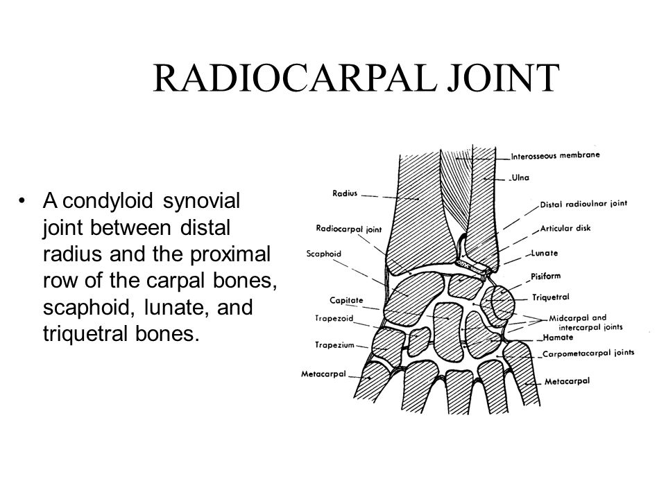 RADIOCARPAL JOINT A condyloid synovial joint between distal radius and the proximal row of the carpal bones, scaphoid, lunate, and triquetral bones.