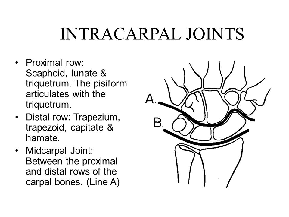 INTRACARPAL JOINTS Proximal row: Scaphoid, lunate & triquetrum. The pisiform articulates with the triquetrum.