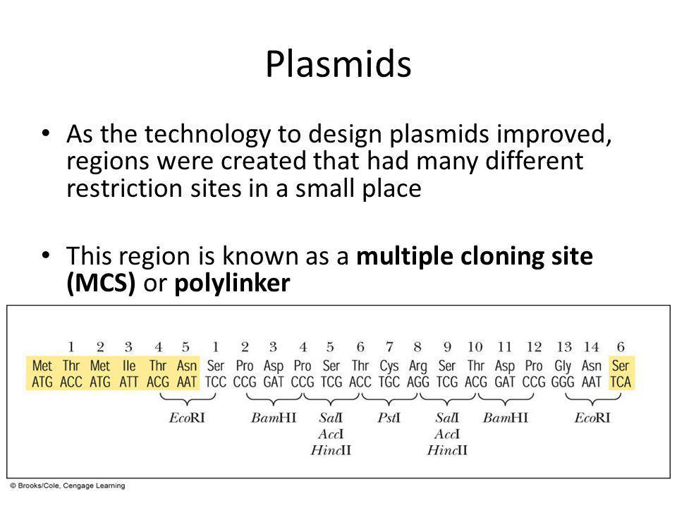 Plasmids As the technology to design plasmids improved, regions were created that had many different restriction sites in a small place.
