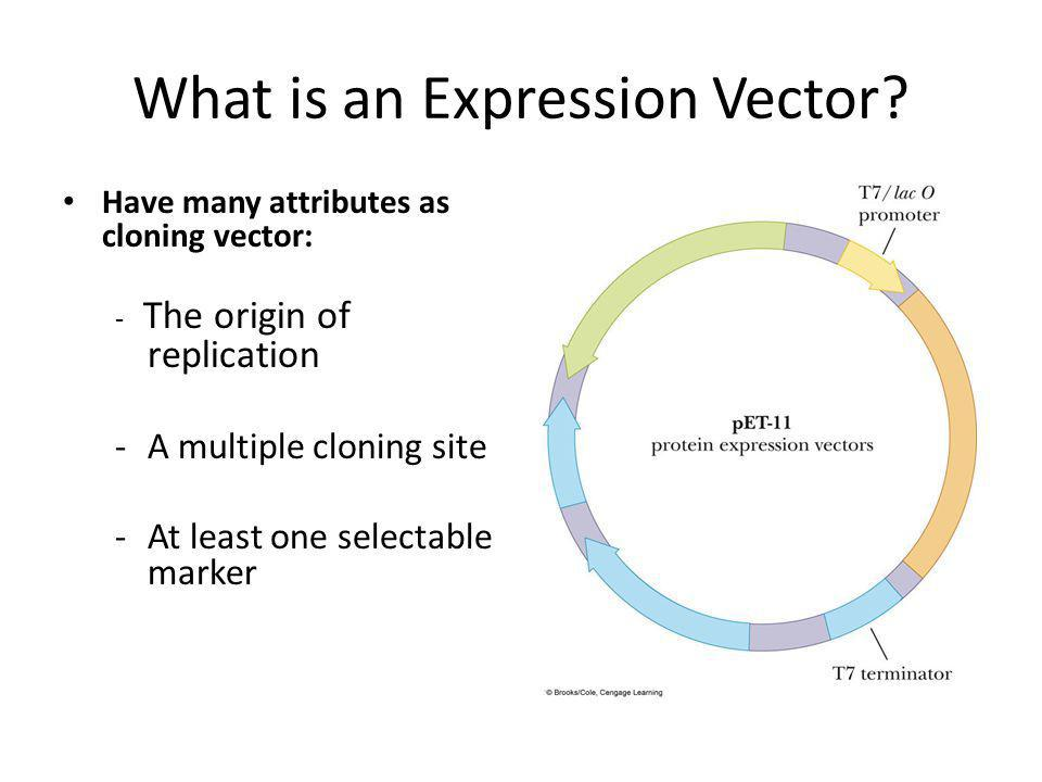 What is an Expression Vector