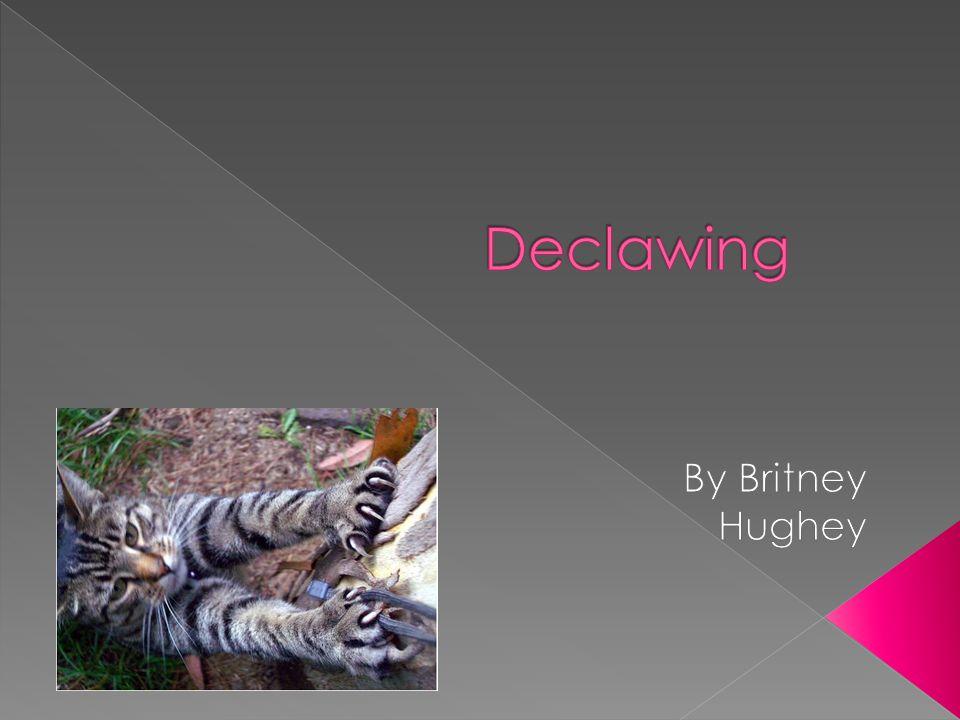 Declawing By Britney Hughey