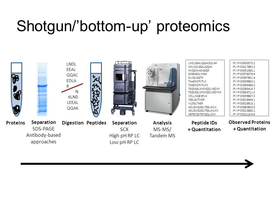 Shotgun/'bottom-up' proteomics