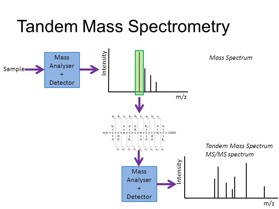 Tandem Mass Spectrometry