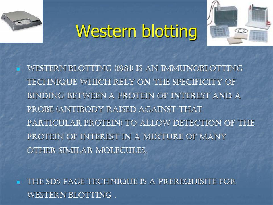 Western blotting