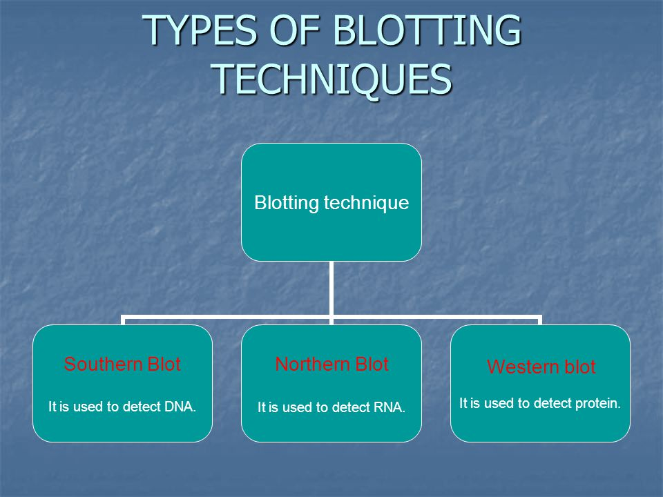 TYPES OF BLOTTING TECHNIQUES