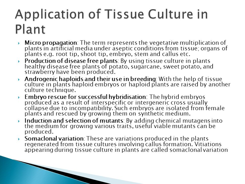 Application of Tissue Culture in Plant