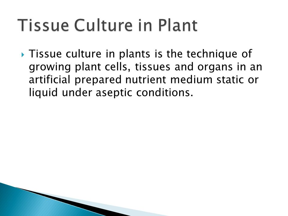 Tissue Culture in Plant