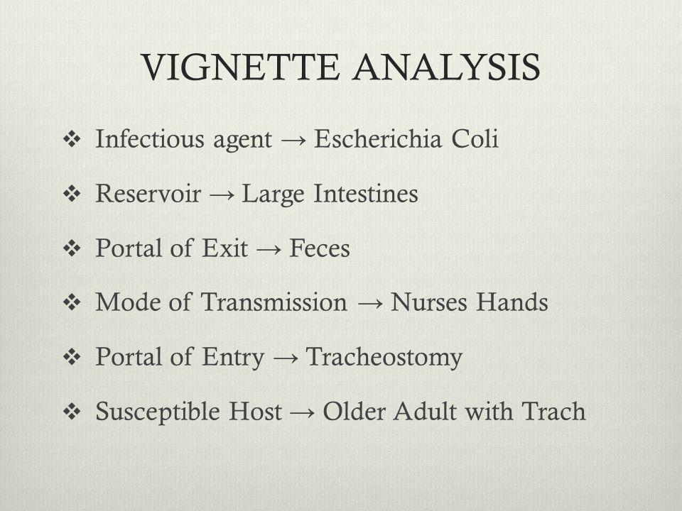 VIGNETTE ANALYSIS Infectious agent → Escherichia Coli