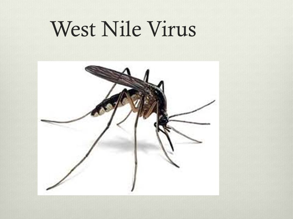 West Nile Virus A mosquito-borne illness that causes sx in about a fifth of those exposed. One in 150 becomes severely ill with encephalitis.