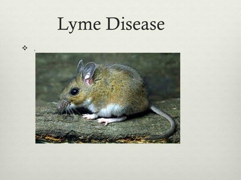 Lyme Disease . East Coast scourge