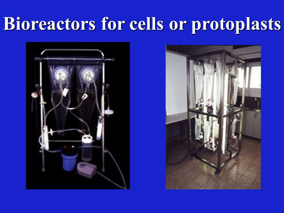 Bioreactors for cells or protoplasts