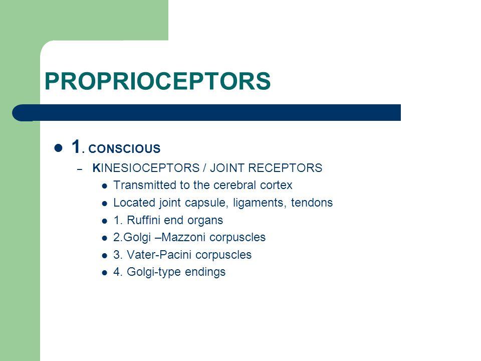 PROPRIOCEPTORS 1. CONSCIOUS KINESIOCEPTORS / JOINT RECEPTORS