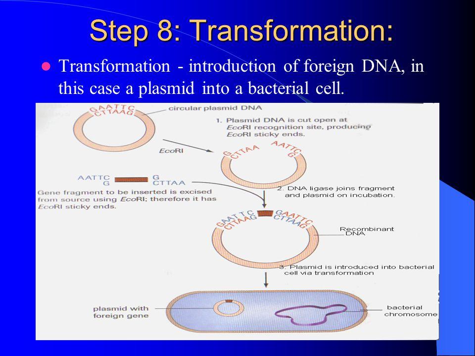 Step 8: Transformation:
