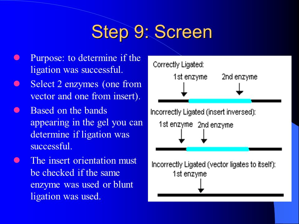 Step 9: Screen Purpose: to determine if the ligation was successful.