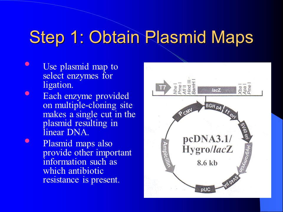 Step 1: Obtain Plasmid Maps