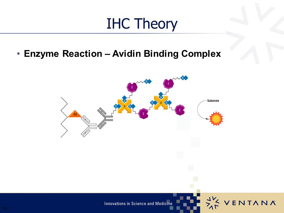 IHC Theory Enzyme Reaction – Avidin Binding Complex Ventana 3/31/2017
