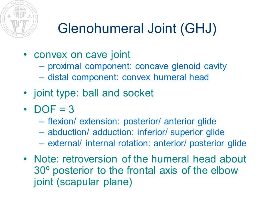 Glenohumeral Joint (GHJ)