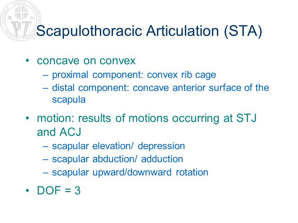 Scapulothoracic Articulation (STA)