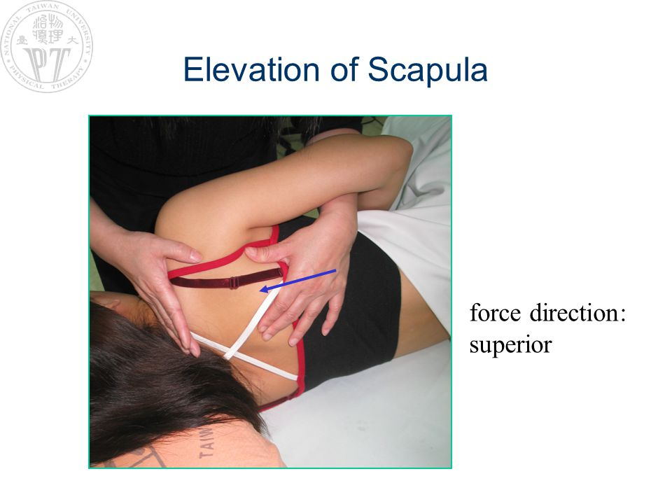 Elevation of Scapula force direction: superior