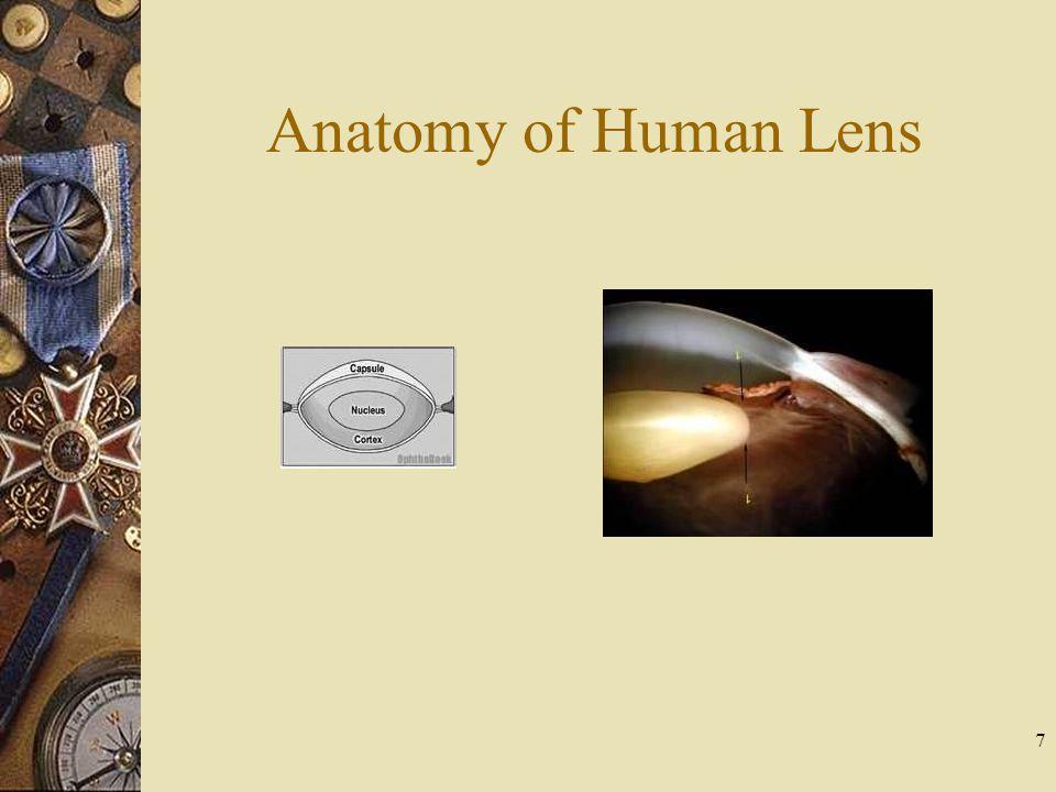 Anatomy of Human Lens