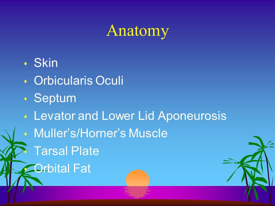 Anatomy Skin Orbicularis Oculi Septum