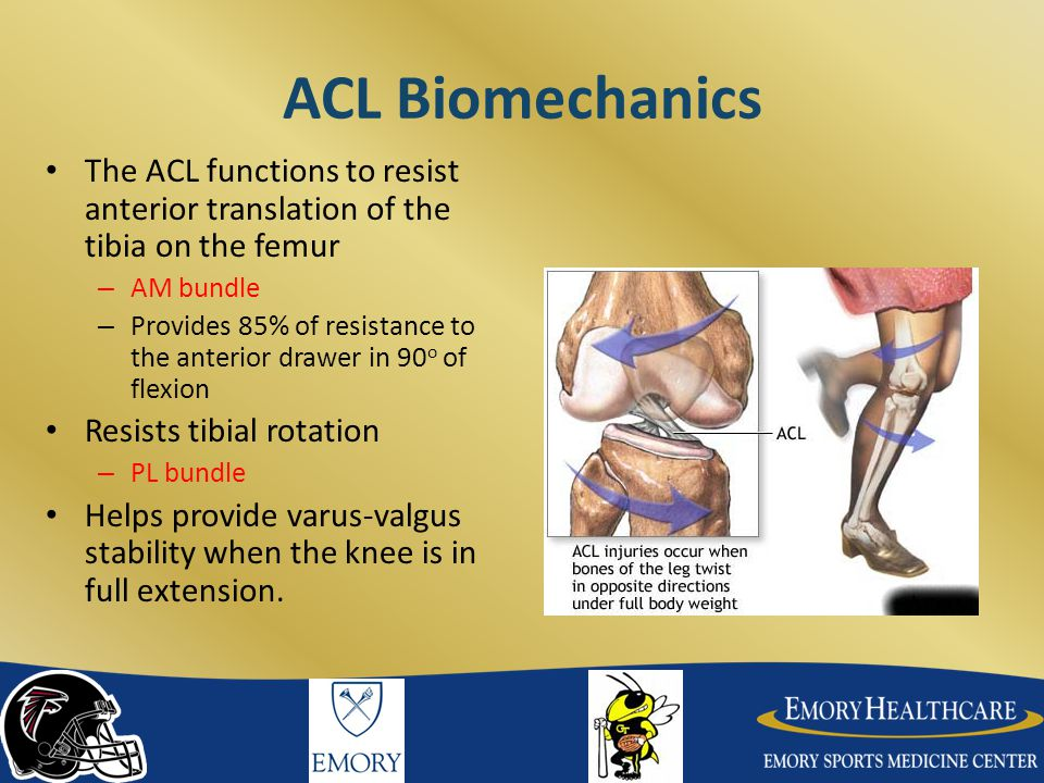 ACL Biomechanics The ACL functions to resist anterior translation of the tibia on the femur. AM bundle.
