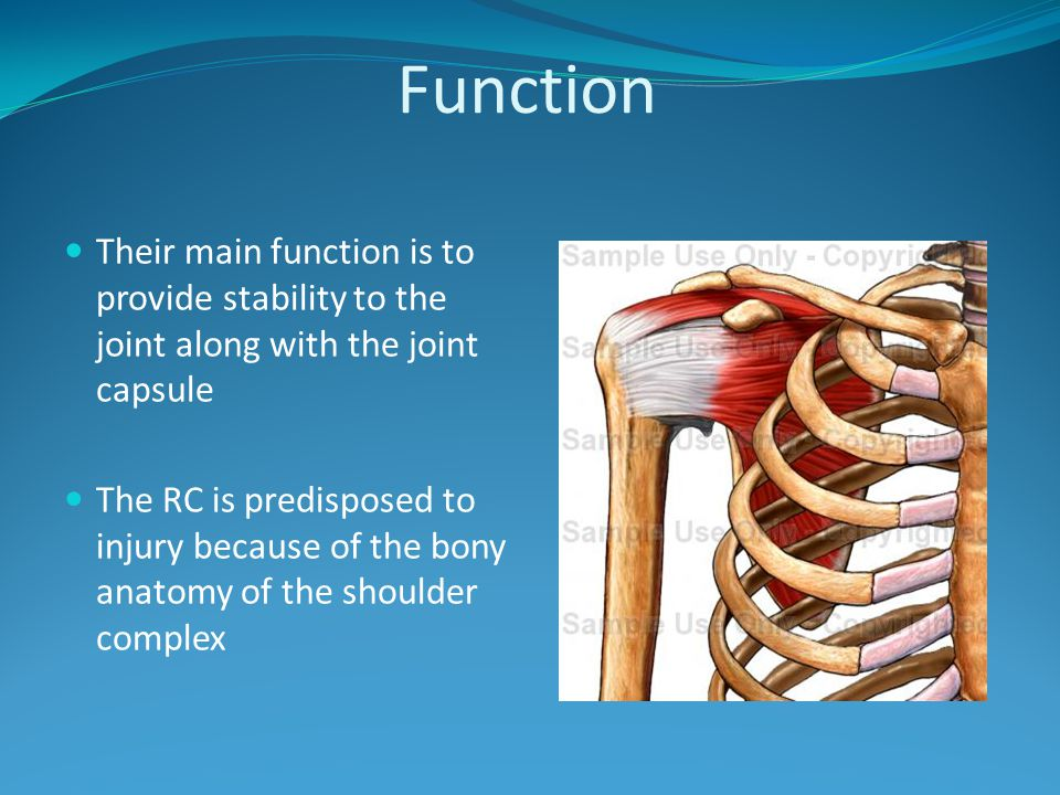 Function Their main function is to provide stability to the joint along with the joint capsule.