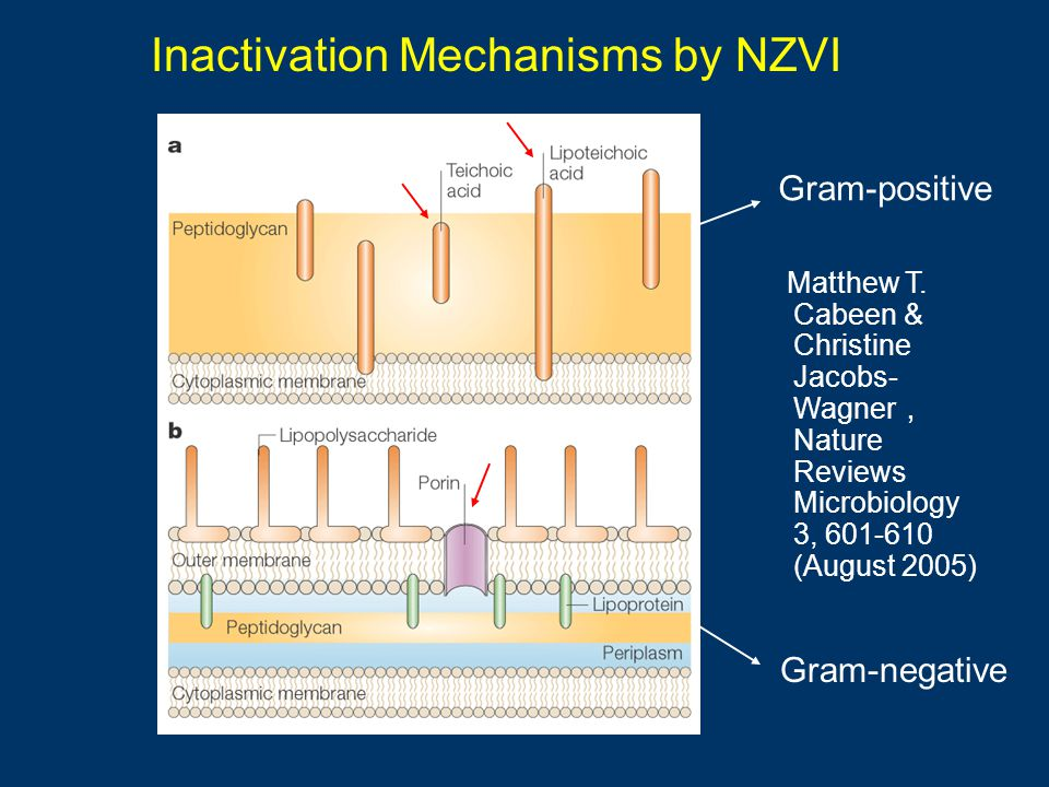 Inactivation Mechanisms by NZVI