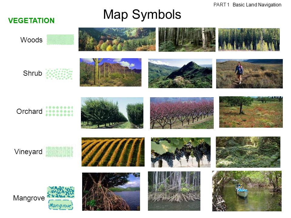 Map Symbols VEGETATION Woods Shrub Orchard Vineyard Mangrove