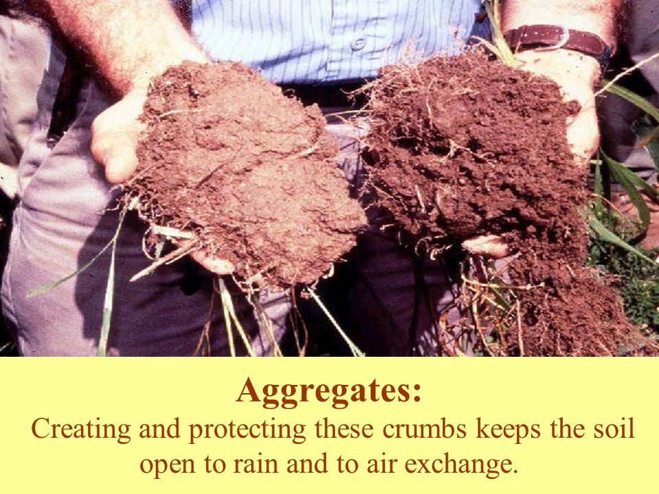 Aggregates: Creating and protecting these crumbs keeps the soil open to rain and to air exchange.