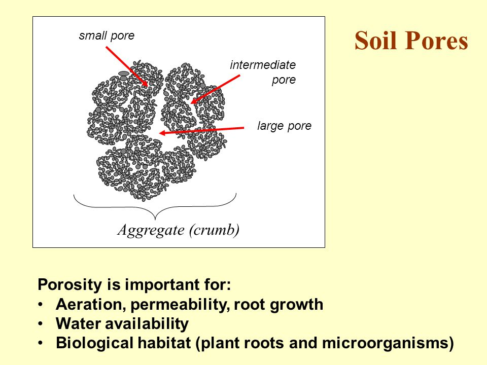 Soil Pores Aggregate (crumb) Porosity is important for: