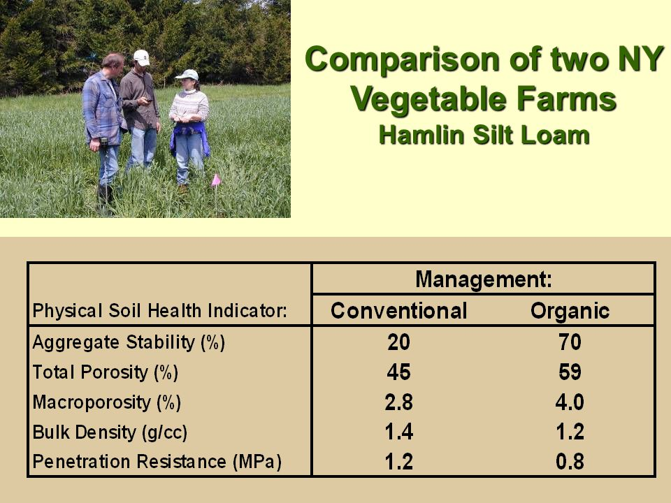 Comparison of two NY Vegetable Farms