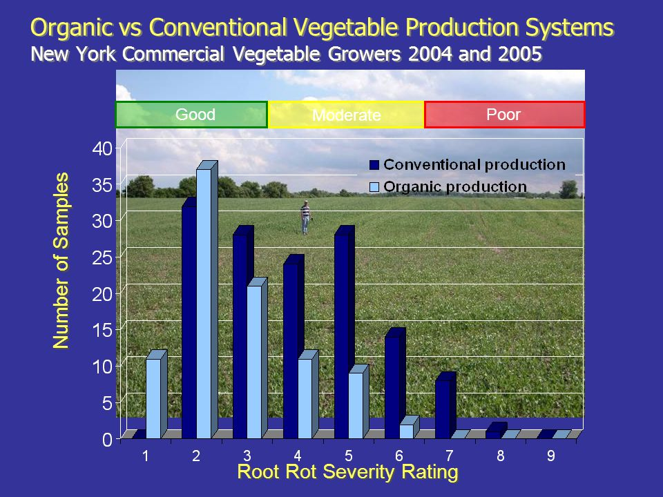 Root Rot Severity Rating