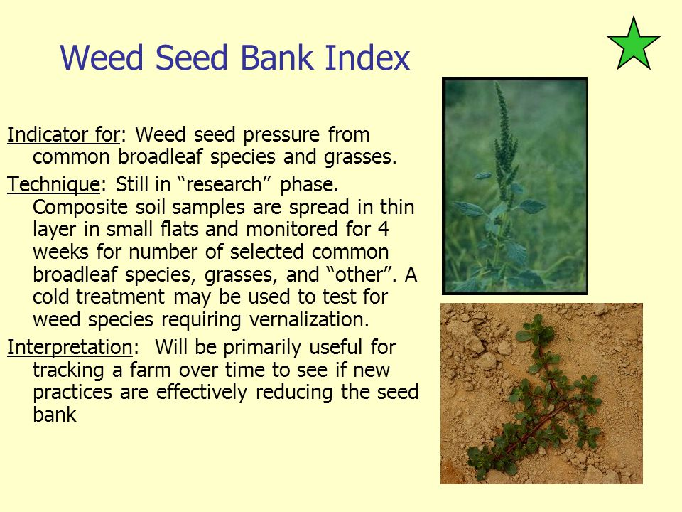 Weed Seed Bank Index Indicator for: Weed seed pressure from common broadleaf species and grasses.