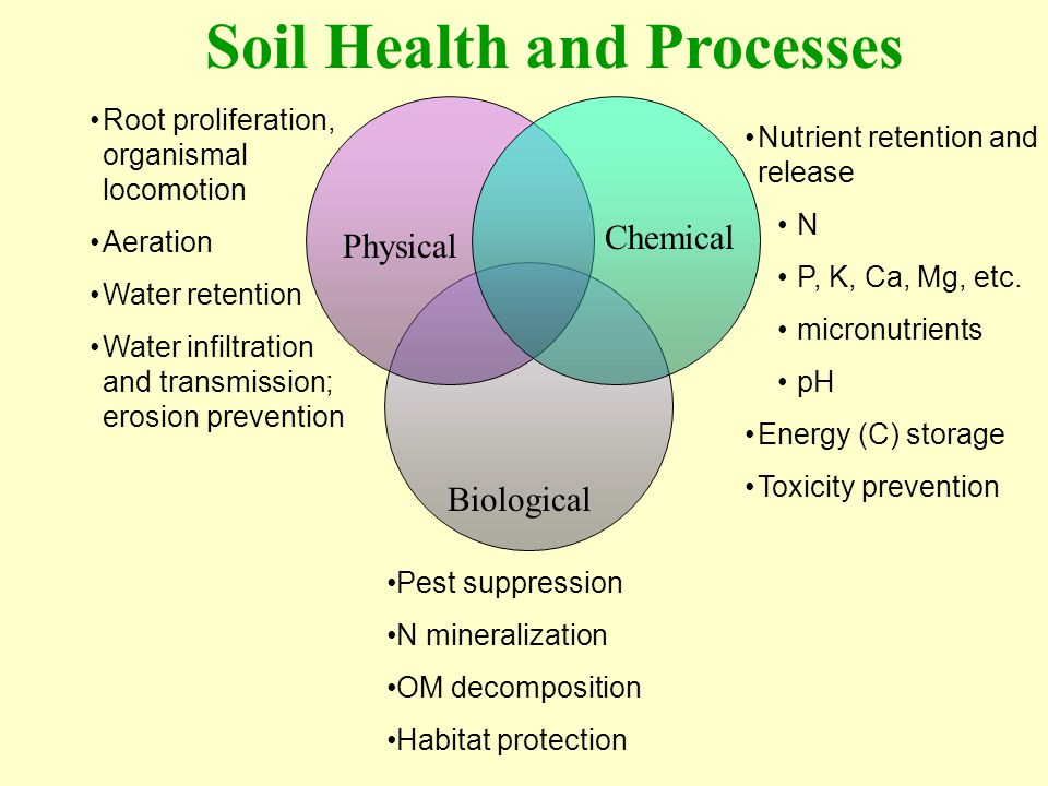 Soil Health and Processes