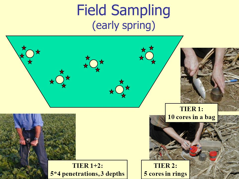 Field Sampling (early spring)