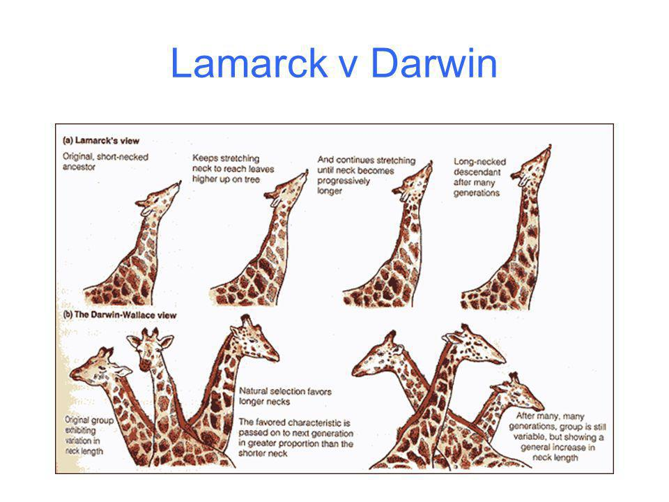 Lamarck v Darwin