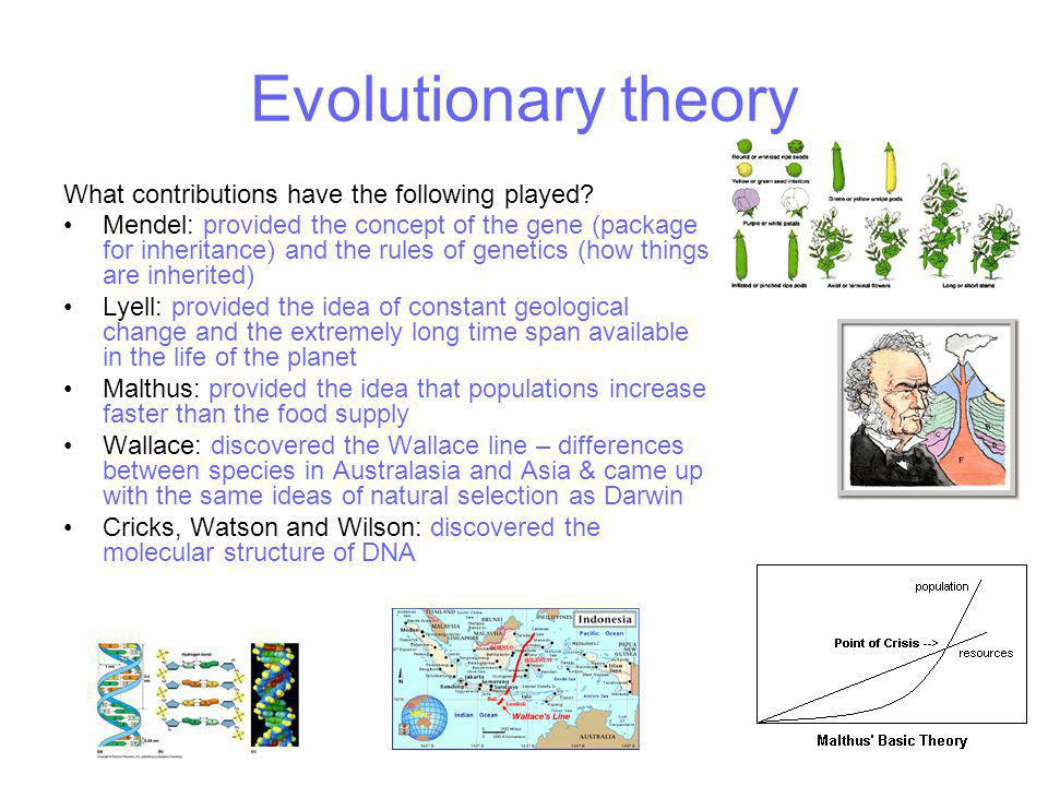 Evolutionary theory What contributions have the following played
