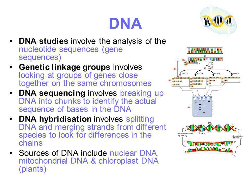 DNA DNA studies involve the analysis of the nucleotide sequences (gene sequences)