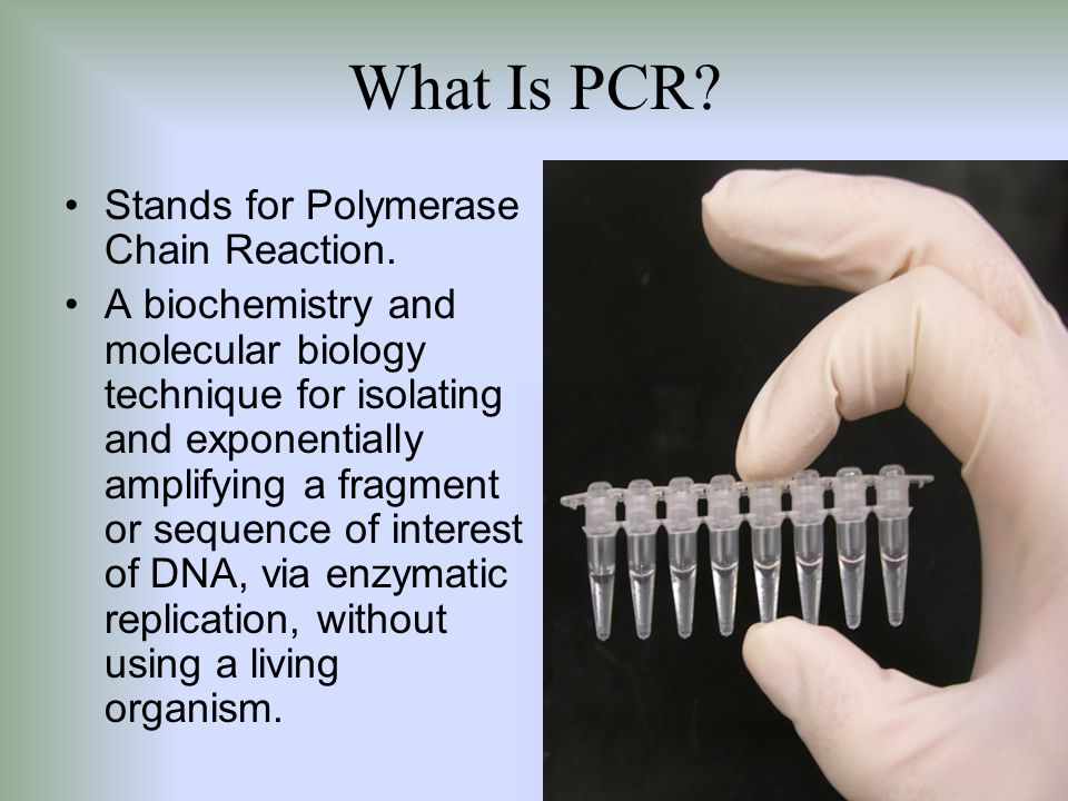 What Is PCR Stands for Polymerase Chain Reaction.