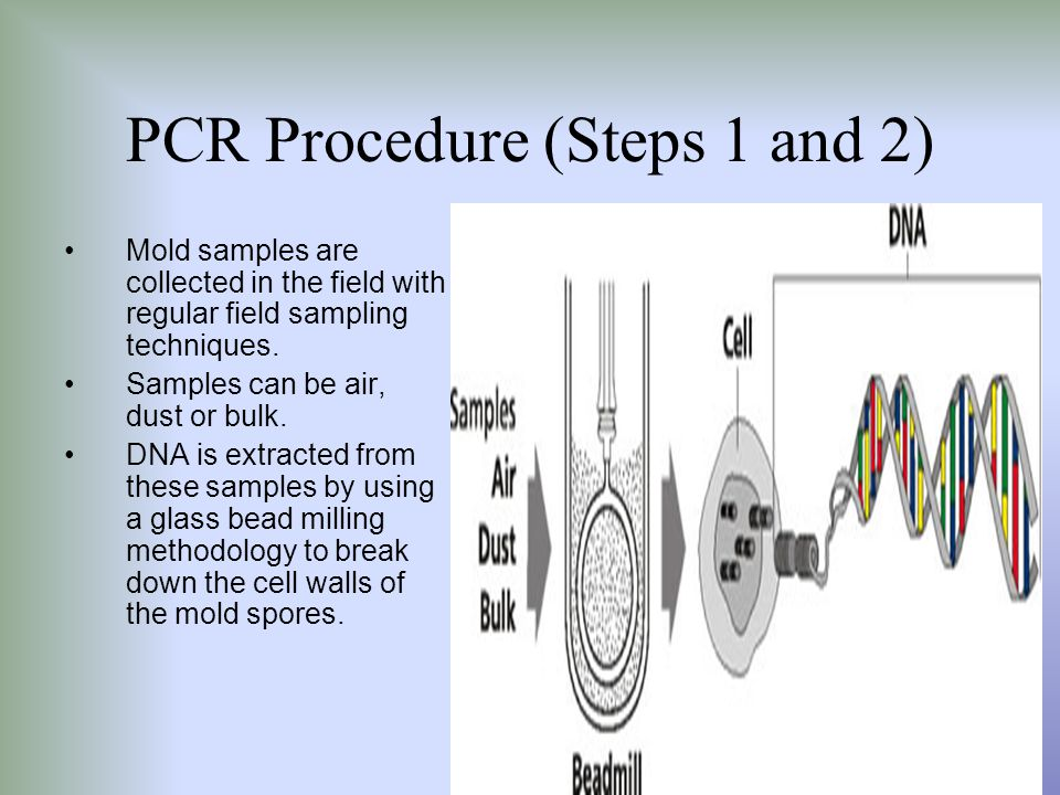 PCR Procedure (Steps 1 and 2)