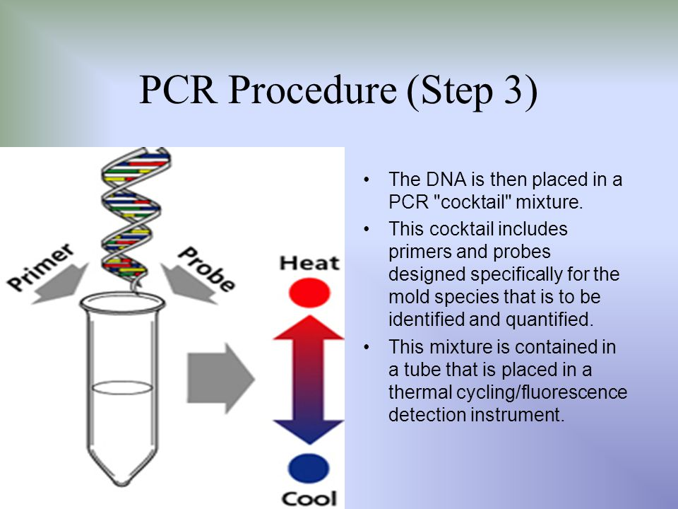 PCR Procedure (Step 3) The DNA is then placed in a PCR cocktail mixture.