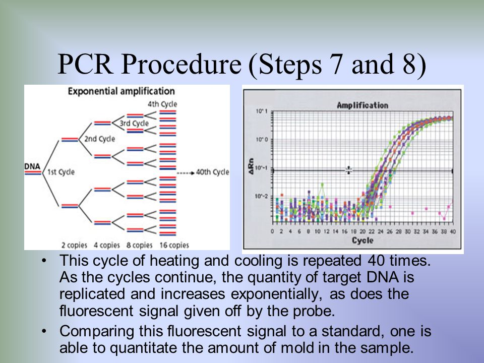 PCR Procedure (Steps 7 and 8)
