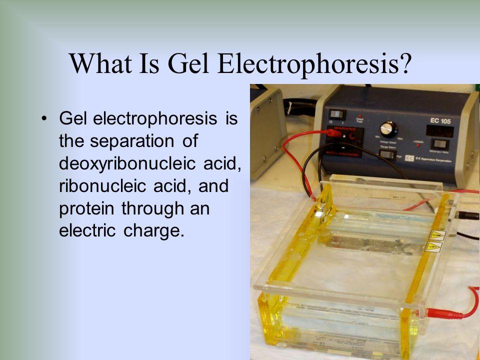 What Is Gel Electrophoresis