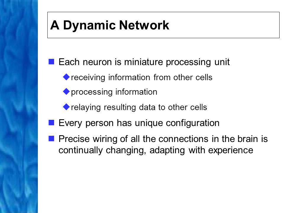A Dynamic Network Each neuron is miniature processing unit