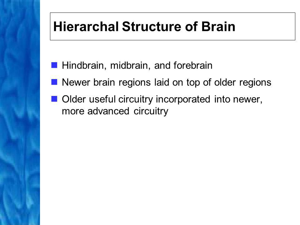 Hierarchal Structure of Brain